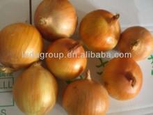 20kg fresh onion