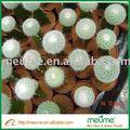 Interior mini plantas suculentas
