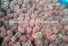 CHINA frozen blackberry