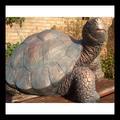 de alta calidad de piedra de gran tamaño las tortugas jardín estatua de la fuente