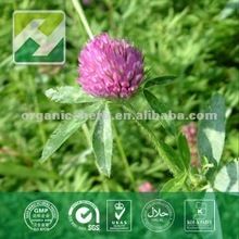 Red Clover extract 5%--8% Isoflavones by HPLC