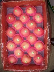 Fresh Apple Red Delicious, Fuji,Gala, Golden Delicious, Pink Lady, Granny Smith, Other