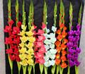 Glicine artificiale fiore, fiore di tarassaco artificiale, artificiale ortensie fiore
