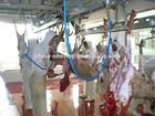 halal meat slaughterhouse for Ram