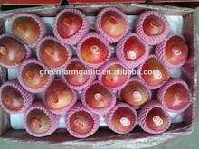 qinguan apple export
