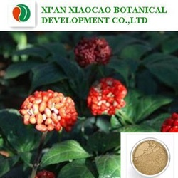 Factory Supply Hot sale Pure Natural/Notoginseng Extract Powder/Radix Notoginseng Extract10%-98% Notoginsenosides