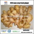 comprar las variedades de jengibre fresco con precio competitivo