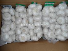 fresh garlic for 2014 new crop pure white