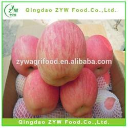 apple fruit/wholesale price apple fruit