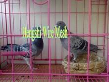 canary bird cage