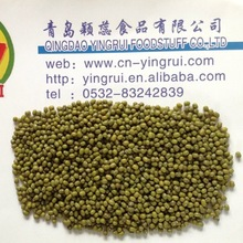 need sprouting green mung bean