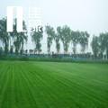 de aspecto natural recto y rizo tejido mezclado fabricación china erba para paisaje al aire libre