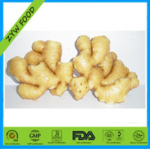 High Quality 2014 New Crop Chinese Fresh Ginger Market Price