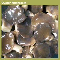 mushroom buyers oyster mushroom / reishi mushroom