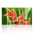تصاميم حسنا 2104 النبات لرسم صور الحياة لا تزال