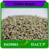 raw bulk green yunnan arabica coffee beans unroasted coffee beans