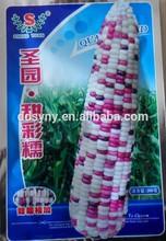 Sy-c102 semilla de maíz híbrido, buena calidad de maíz híbrido de semillas para el cultivo, semillas de maíz