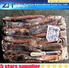 illex argentinus squid,frozen illex squid,frozen squid for sale