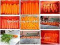 a granel de zanahoria vegetales lista de precios con bajos y competitivos