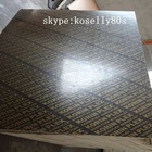 18mm Korinplex Plywood /Korin plex Film Faced Plywood price