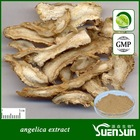 GMP factory angelica sinensis extract dong quai extract