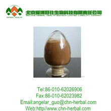 Plant extract Sex increase medicine Manufacturer wholesale damiana damiana powder extract