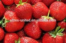 fresh strawberry price