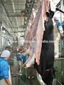 Matériel d'élevage de bovins d'abattage halal, de vache pour compléter abattage ligne bovins, desquamation de la peau machine