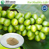 Hight quality green coffee bean extract powder/98% chlorogenic acid