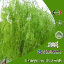 White willow bark extract 15%-98% Salicin, Salix alba extract
