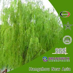 White Willow Bark Salicin/Natural White Willow Bark Extract