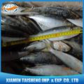 todos los tipos de congelados de sardinas frescas para cebo en la venta