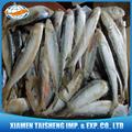 Frozen sardinas harina de pescado precio para cebo a la venta
