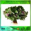 Amaranth powder on food additive / Amaranth extract powder