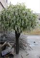 decorazione di interni bianco glicine artificiale albero in nozze hotel falso glicine albero