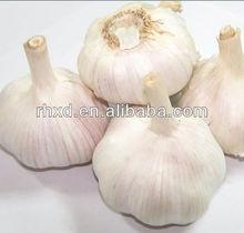 2014 china new fresh garlic