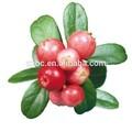 Anti- envelhecimento o rei de vc 100% puro orgânico de óleo de rosa mosqueta
