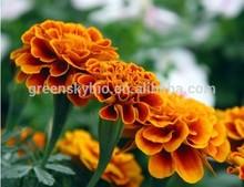 Pure Marigold extract, zeaxanthin powder, zeaxanthin powde