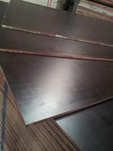 Film faced plywood Eucalyptus core hualin