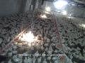 De pollos de engorde de aves de corral cobertizo diseño