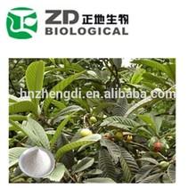 nome científico da erva chinesa folium eriobotryae extrato