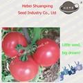 melhor alto rendimento sementesdetomate para o plantio