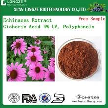 High quality Echinacea Extract/Echinacea angustifolia extract