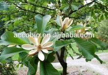 100% pure Cosmetic grade Magnolia Bark Extract for