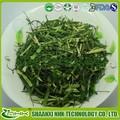 Organic cevada grass em pó solúvel em água cevada grass suco em pó