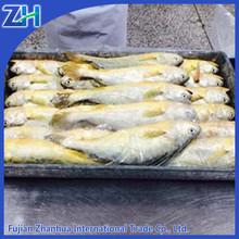On sale fresh frozen yellow croaker fish