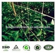 Climbing Plant Support Netting / Pea & Bean Net 2mx10m