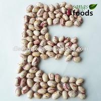 Wholesale Dried Beans, Argentina Beans