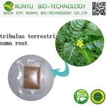 tribulus terrestris suma root 100% natural extract made in china