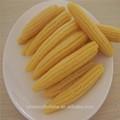 Poder del alimento lista de bebé en lata de maíz